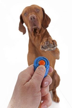 dog-clicker1